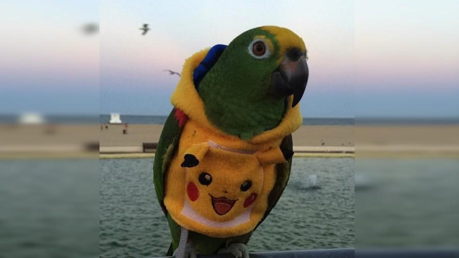 Pikachuparrot