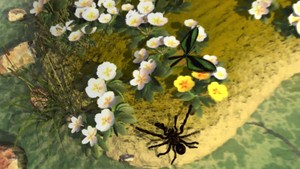 Eeek a spider!