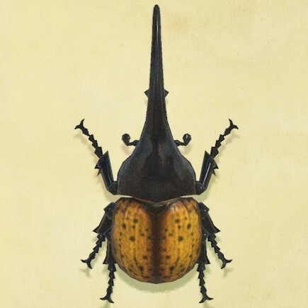 Horned Herucles