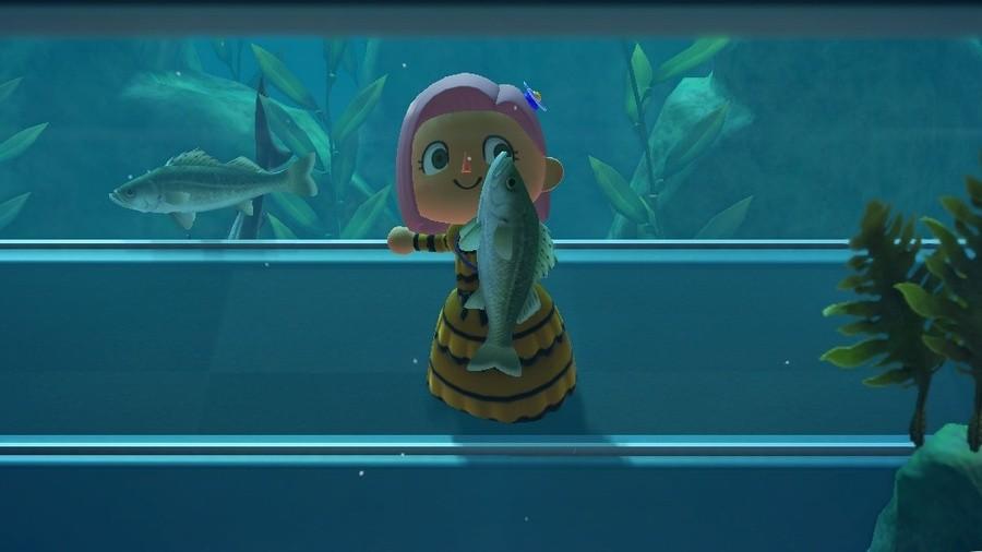 Sea Bass - Nintendo Life IMG