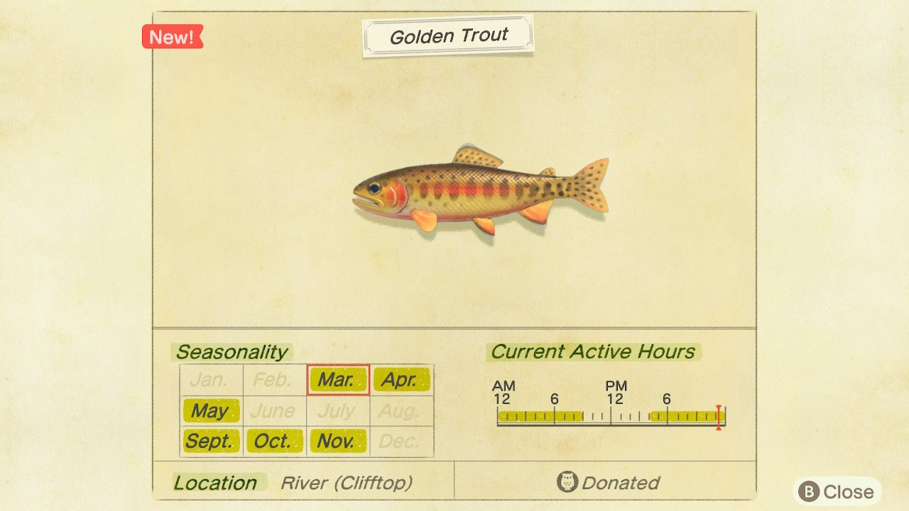 Golden trout animal crossing
