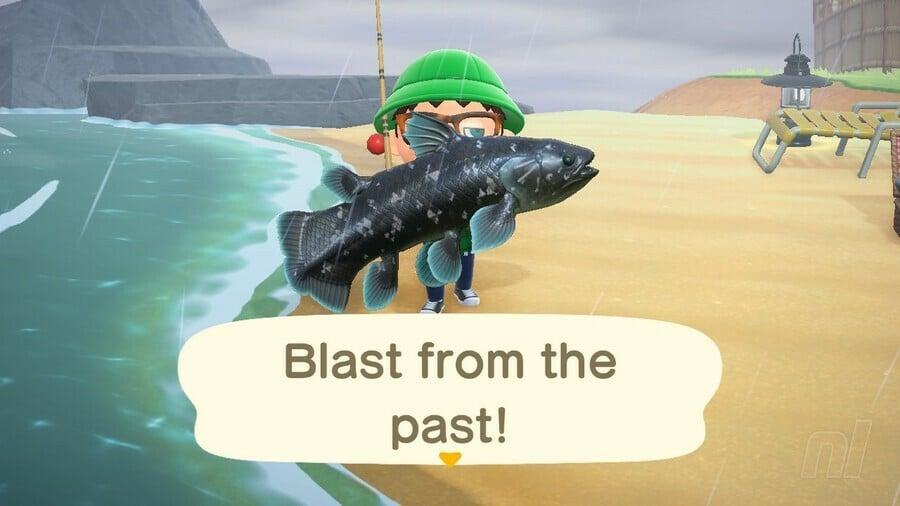 Coelacanth Animal Crossing New Horizons