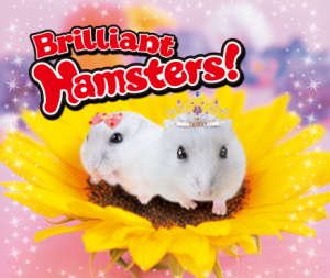 Brilliant Hamsters!