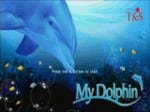 My Dolphin Cover (Click to enlarge)