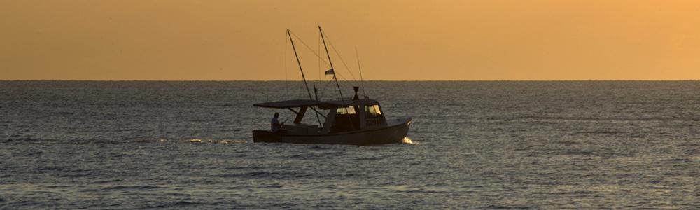 Reel fishing challenge wiiware news reviews trailer for Reel fishing game