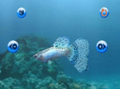 USA WiiWare Update: My Aquarium