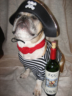 A French pirate dog, of course.
