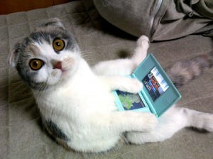 Not the kind of kitty required to save for a DS