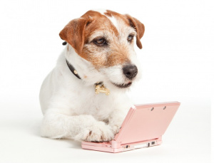Even dogs relax with 3DS
