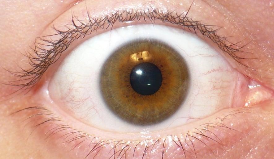 Eye eye, captain