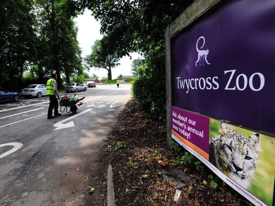 Rare's artists visited the nearby Twycross Zoo during development, hoping to find inspiration