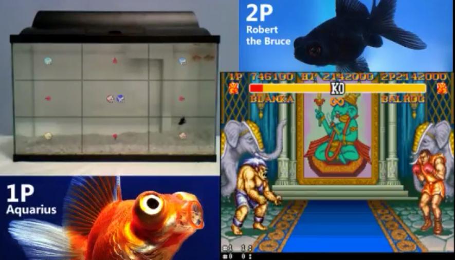 Fish SF2