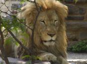 My Zoo (WiiWare)