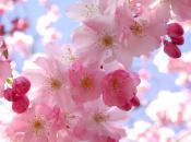 Hello Flowerz (DSiWare)