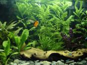 Zenquaria: Virtual Aquarium (WiiWare)