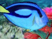 My Aquarium 2 (WiiWare)