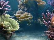 Fish Tank (WiiWare)