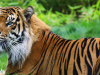 My Zoo Vet Practice 3D (3DS eShop)