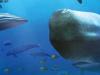My Aquarium: Seven Oceans (DSiWare)