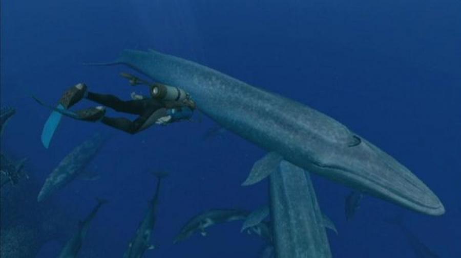Endless Ocean 2: Adventures of the Deep Review - Screenshot 5 of 5