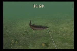 Reel Fishing Challenge Review - Screenshot 2 of 4