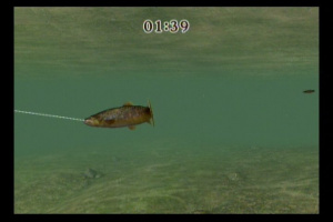 Reel Fishing Challenge Review - Screenshot 1 of 4