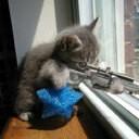 KittyCat55