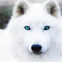 Snowdog14